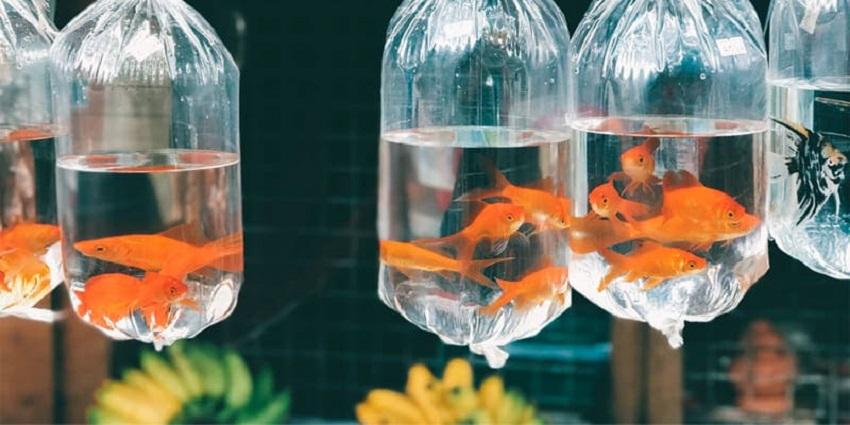 transport fish safely